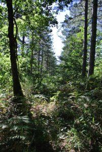 Les randonnées en forêt 1