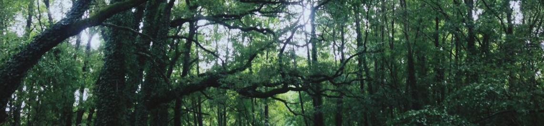 Les randonnées en forêt